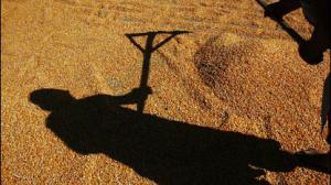 тень агрария